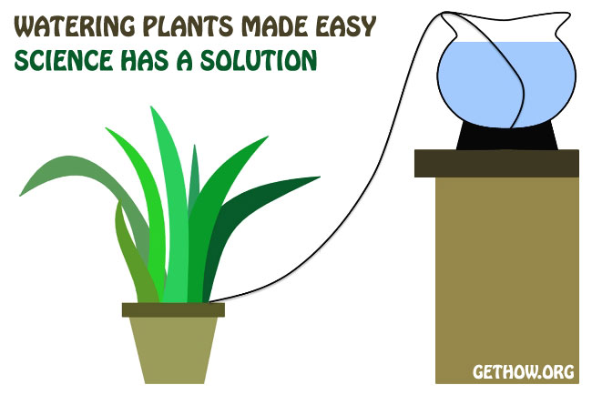 How to Water Your Home Plants in Absence
