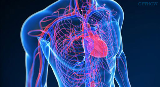 Ayurvedic Medicine to Treat Your Heart Blockages Naturally
