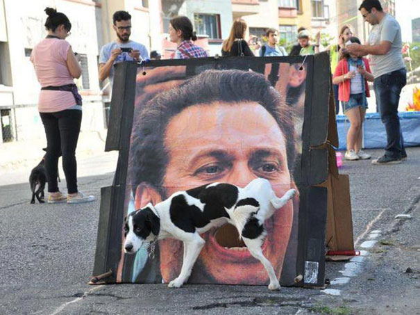 Dog Urinates on Poster