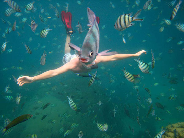 Underwater Fish Photobomb